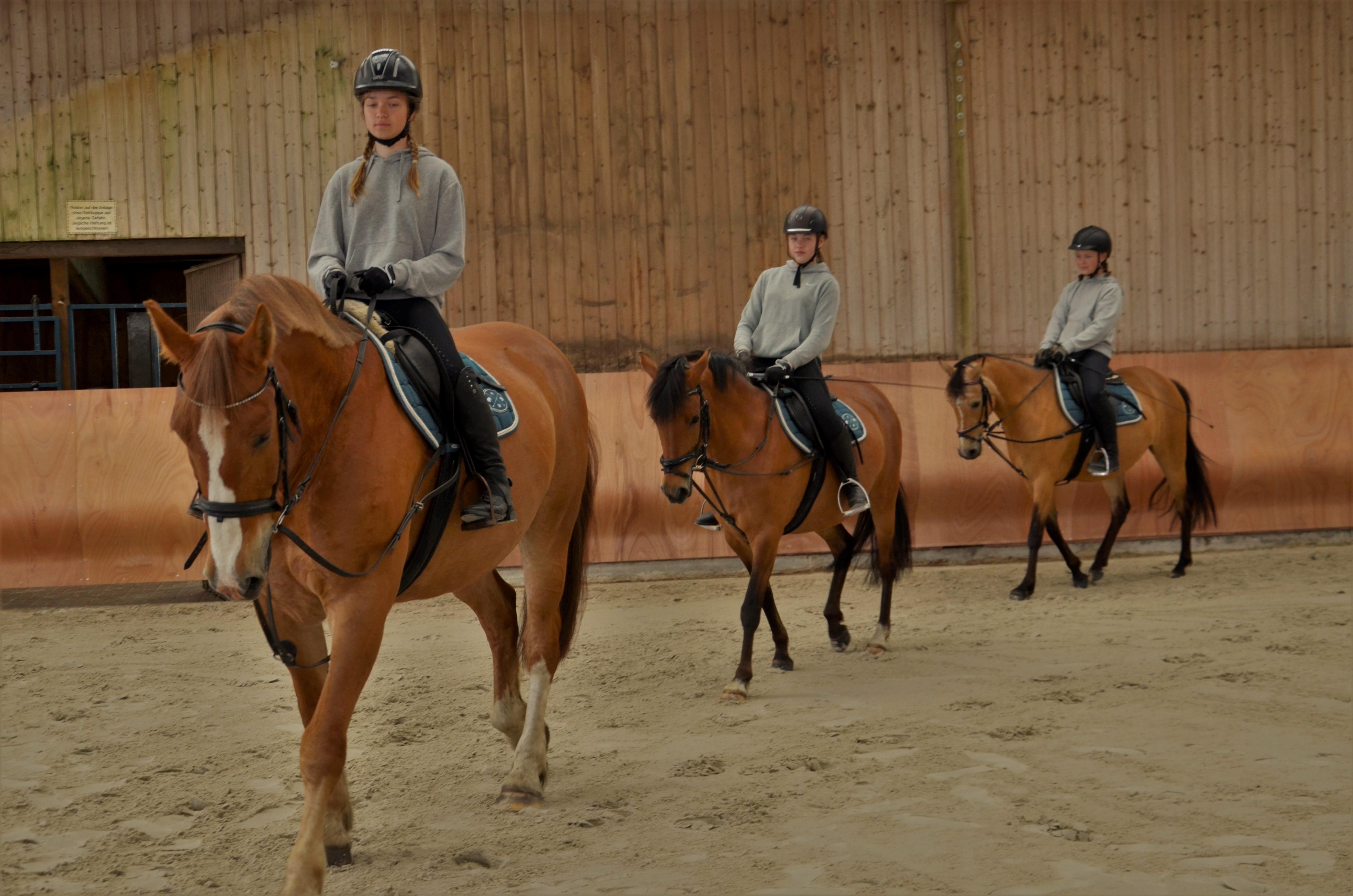 Gruppenreitunterricht bis max. 5 Reiter/innen (keine Abteilung)